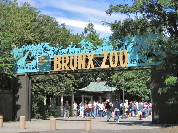 bronxi-állatkert