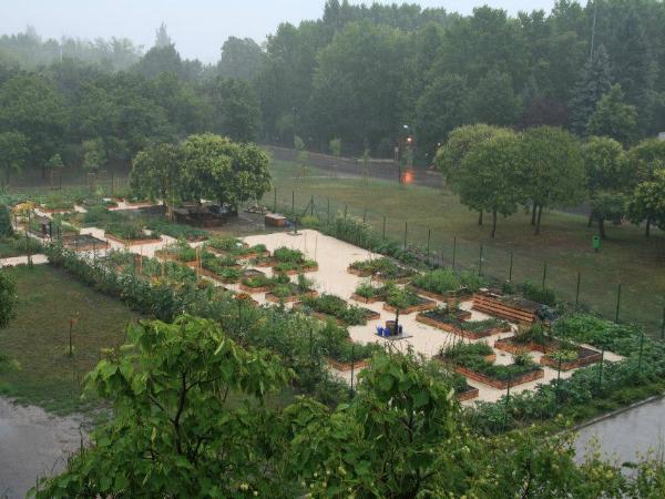 közösségi kert-békási-kert
