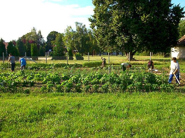 közösségi-kert-kardakúti-közösségi-kert