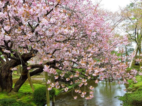 magánkert-kenroku-en-garden