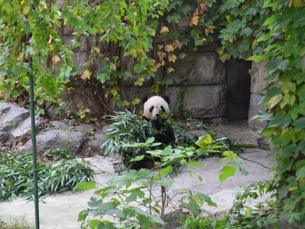 pekingi-állatkert