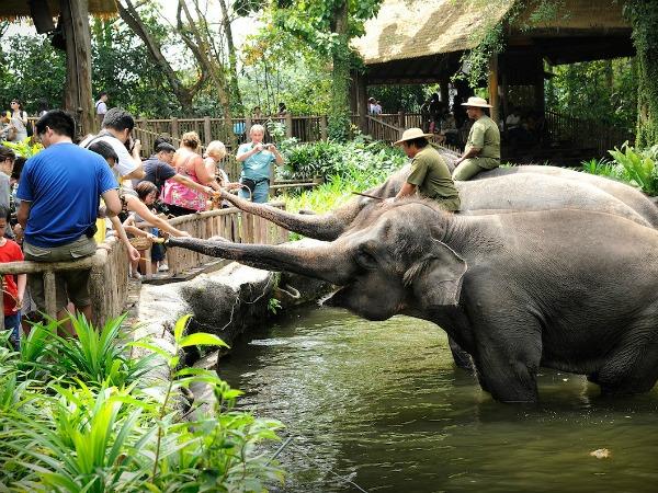 szingapúri-állatkert