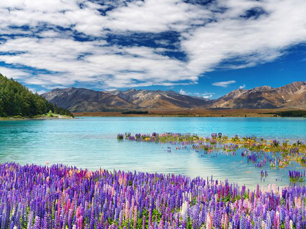 lake-tekapo-új-zéland