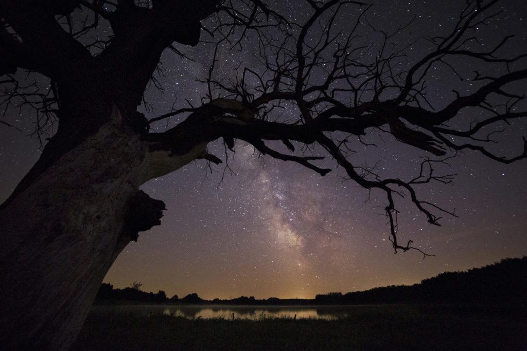 csillagpark-pic-01