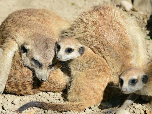 budapest-zoo-szurikáták