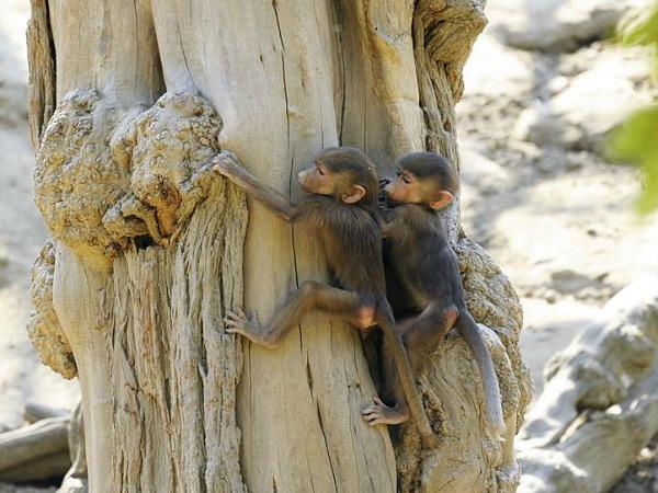nyíregyházi-állatpark