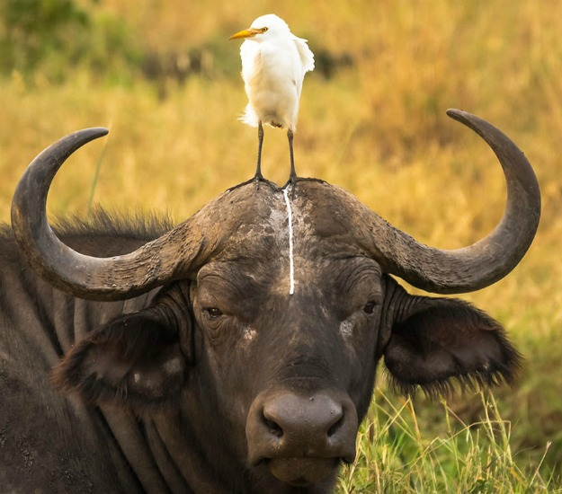 comedy-wildlife-photography-awards-shortlist-2016-18-57fb40b7bed8d__880