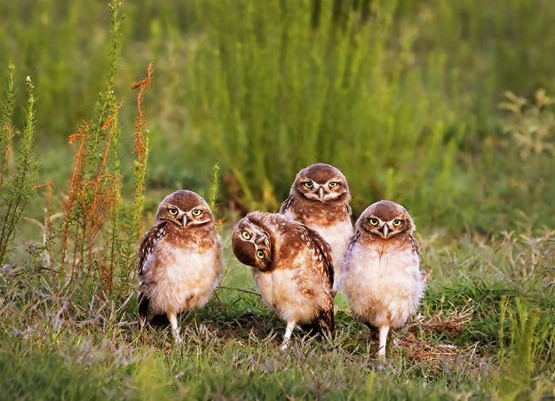 comedy-wildlife-photography-awards-shortlist-2016-23-57fb40c339239__880
