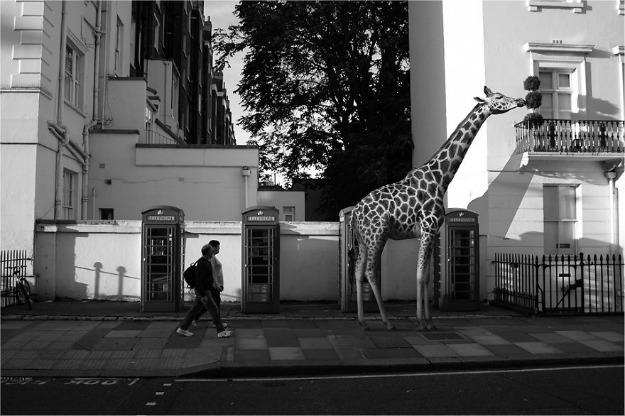 the-zoo-8__880