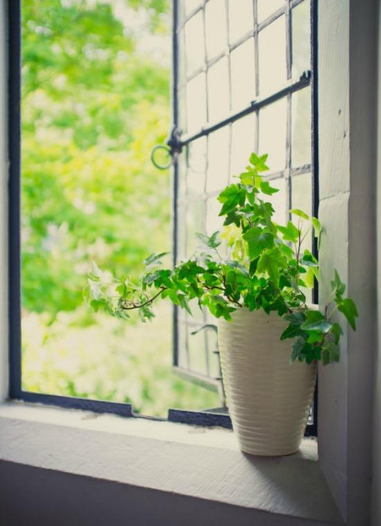 1479765290-hbu-stress-plants-ivy