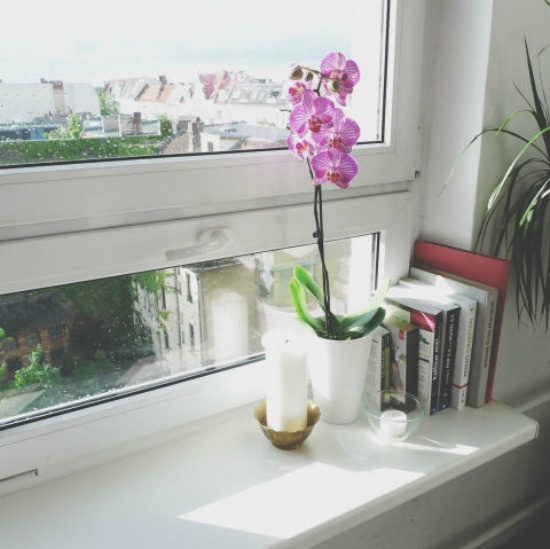 1479765312-hbu-stress-plants-potted-orchid