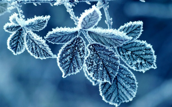 cold-winter-morning-frost-leaves__880