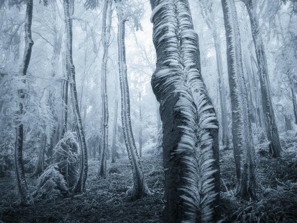 frozen-ice-art-23__8807
