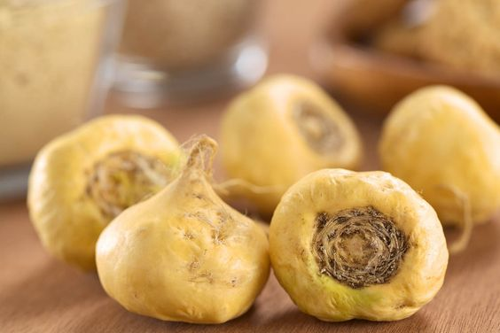 Fresh maca roots or Peruvian ginseng (lat. Lepidium meyenii) which are popular in Peru for their various health effects (Selective Focus Focus on the maca roots in the front)