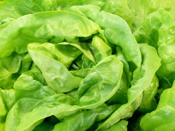 fejes-saláta