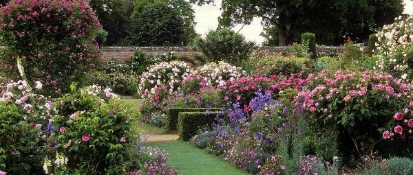 Mottisfont Abbey Rose Gardens