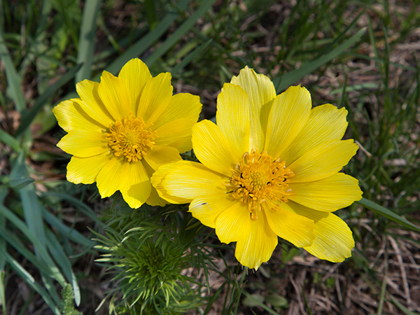 tavaszi-hérics