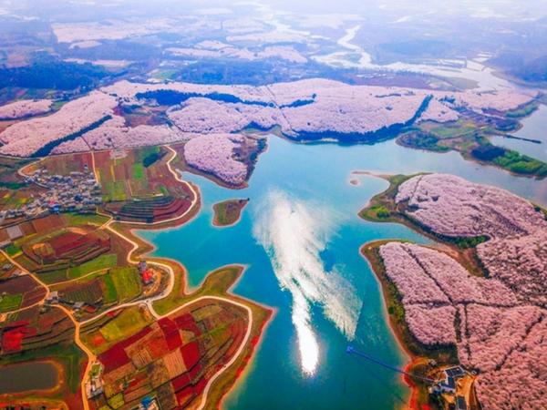 cseresznyevirágzás - nyitókép